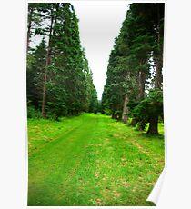 Pine Tree Avenue Poster