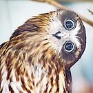 Big Owl Eyes!  by Adriano Carrideo