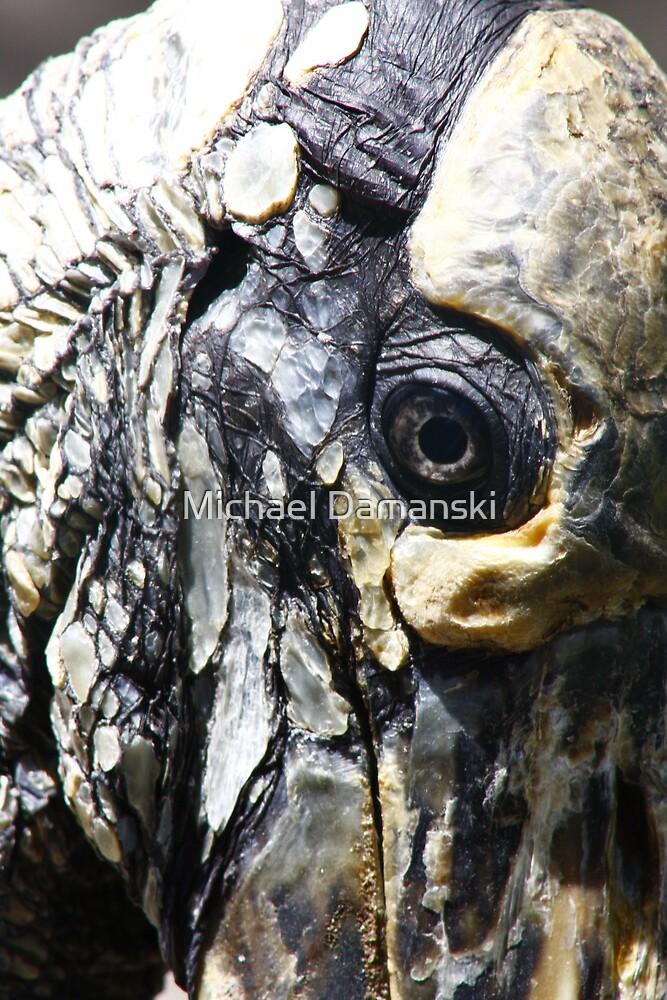 Wooden Stork by Michael Damanski