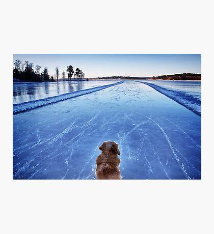 On ice Photographic Print
