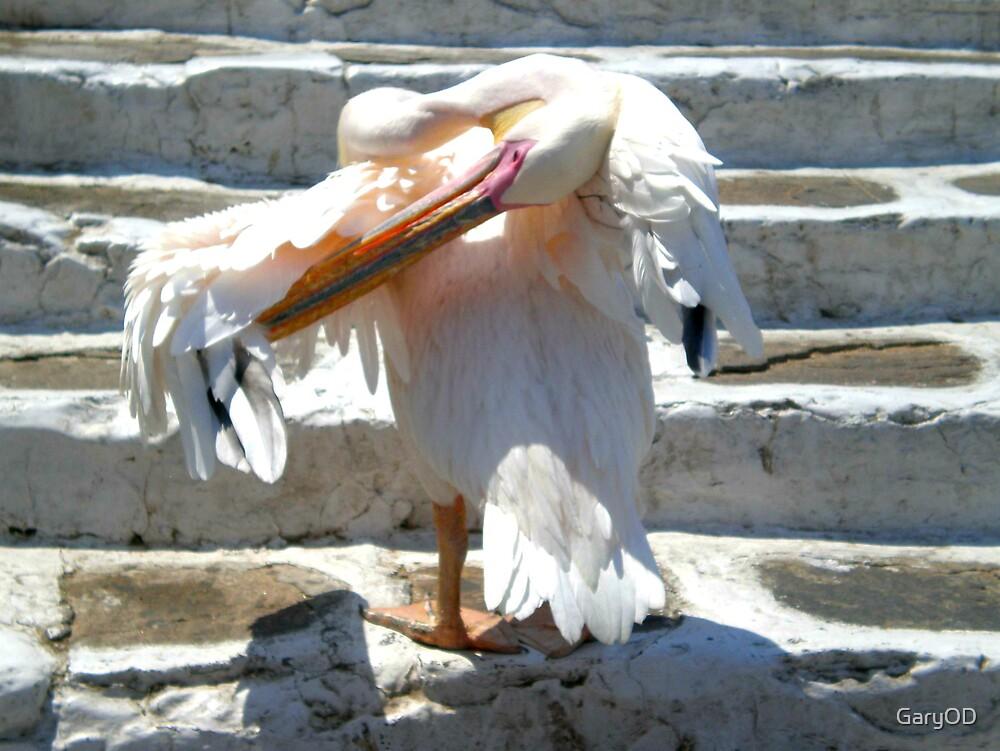 Hellenic Pelican by GaryOD