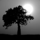 boab silhouette by col hellmuth