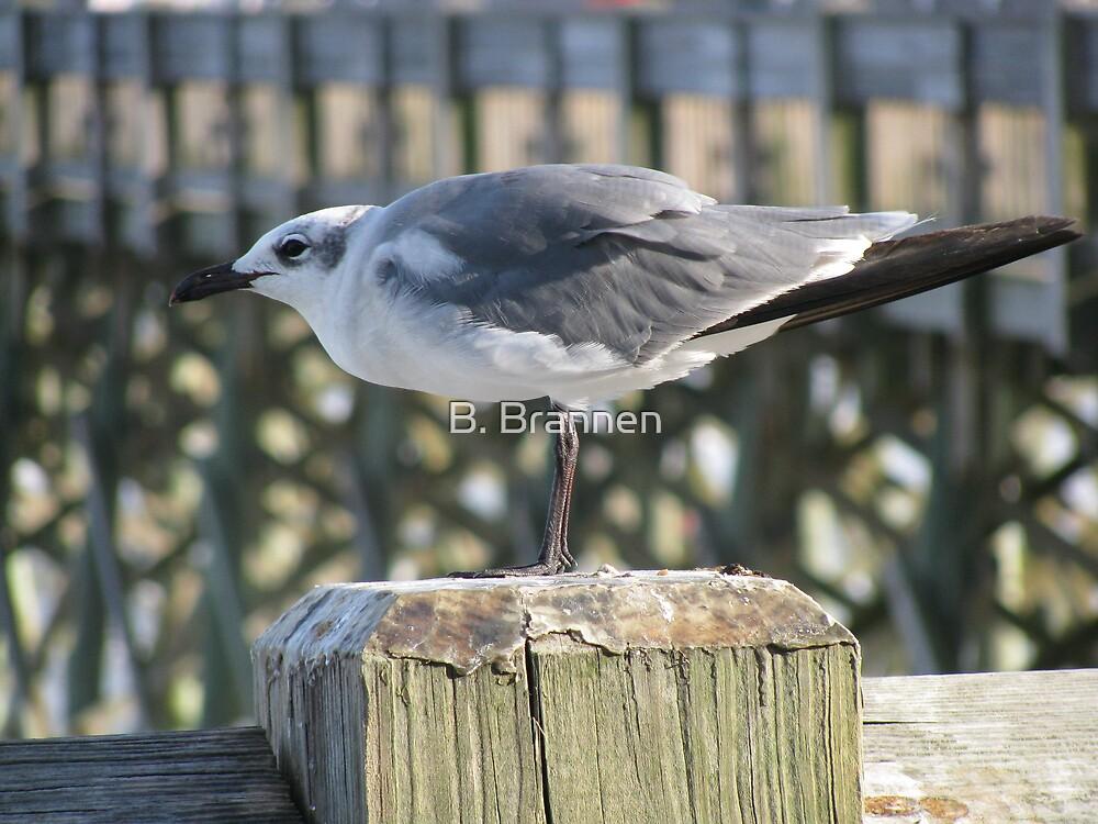 Seagull, Folly Beach by B. Brannen