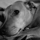 Fudge In Black and White by davesphotographics