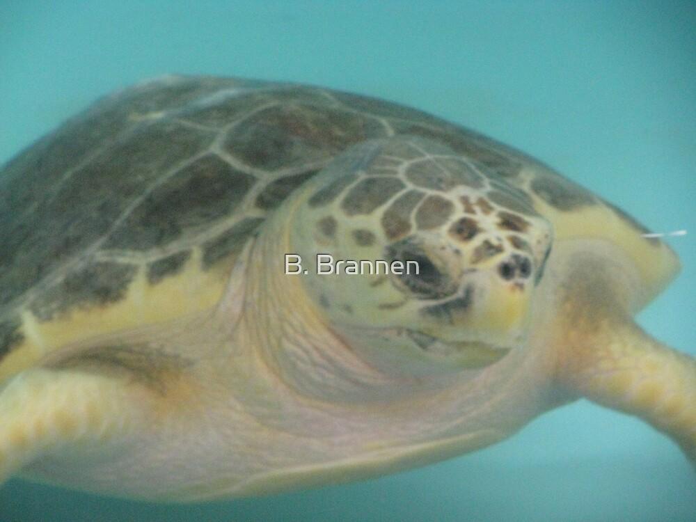 Sea Turtle by B. Brannen