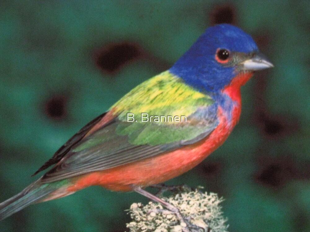 Pretty Bird by B. Brannen