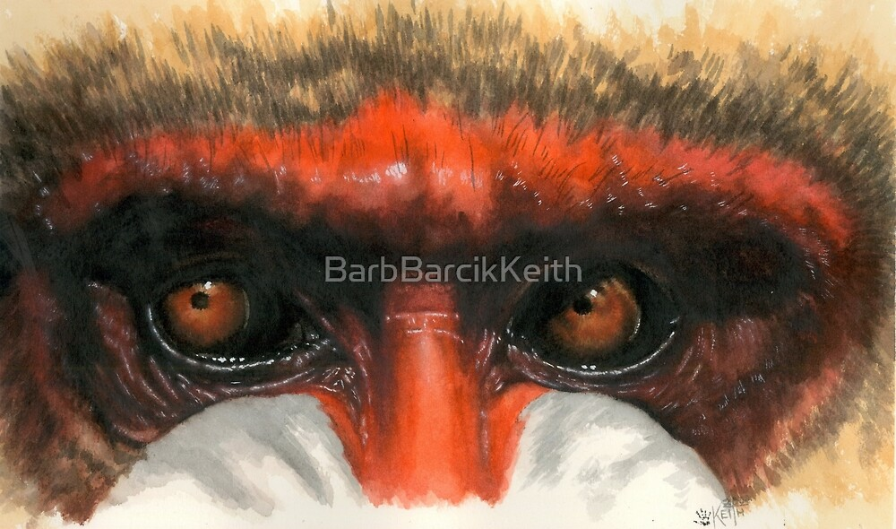 Eye-Catching Mandrill by BarbBarcikKeith