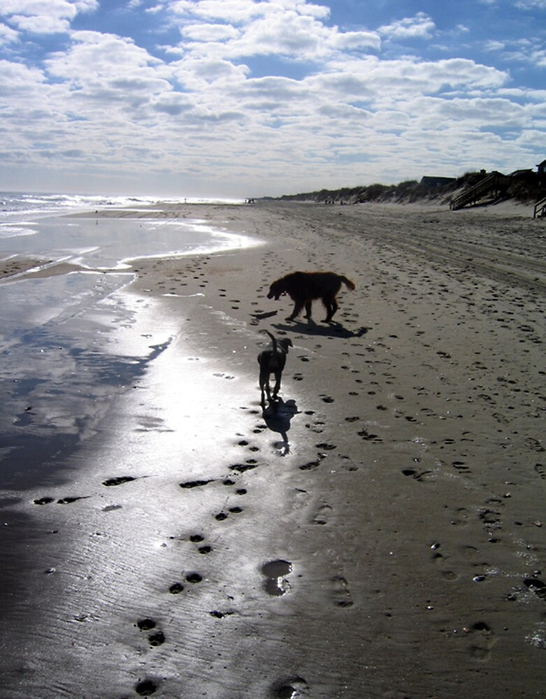 My two dogs, Outer Banks, North Carolina by fauselr