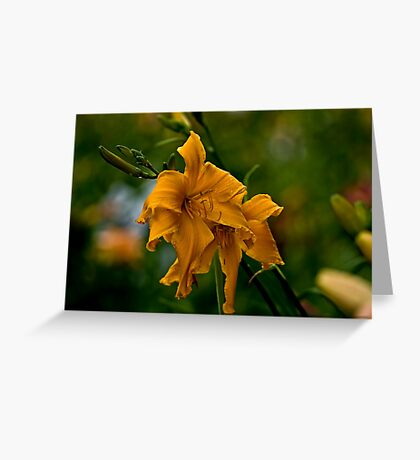 """""""Jersey Spider"""" Daylily Greeting Card"""