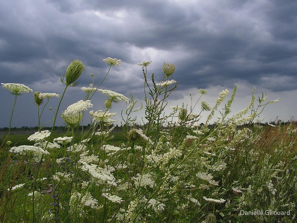 A windy day by Danielle Girouard