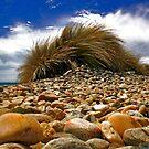 Marrawah Rock, TAS by Milgate Asher