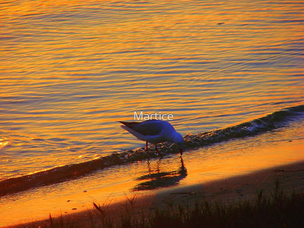 Beach Gull by Martice