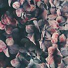 Hydrangea moody blues by Ingrid Beddoes