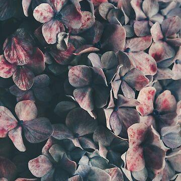 Hydrangea moody blues by Ingz