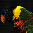 Lorikeet by Anne Smyth