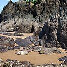 Oyster Rockscape by Kerryn Madsen-Pietsch