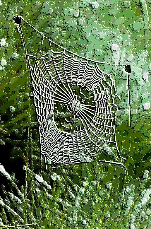 web in contour by Peter  Tonelli