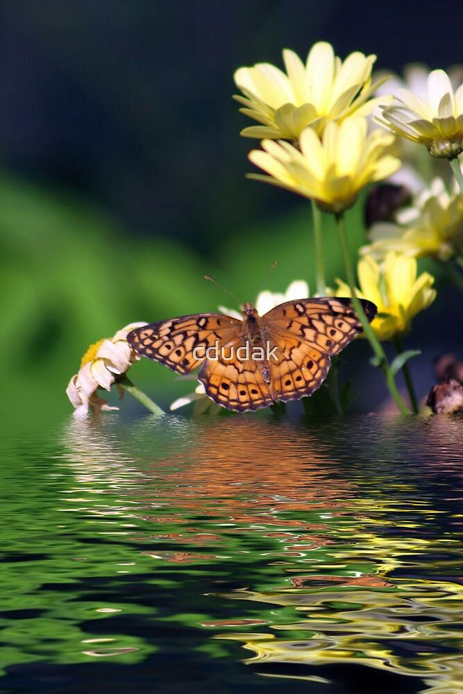 Flooded Butterfly by cdudak
