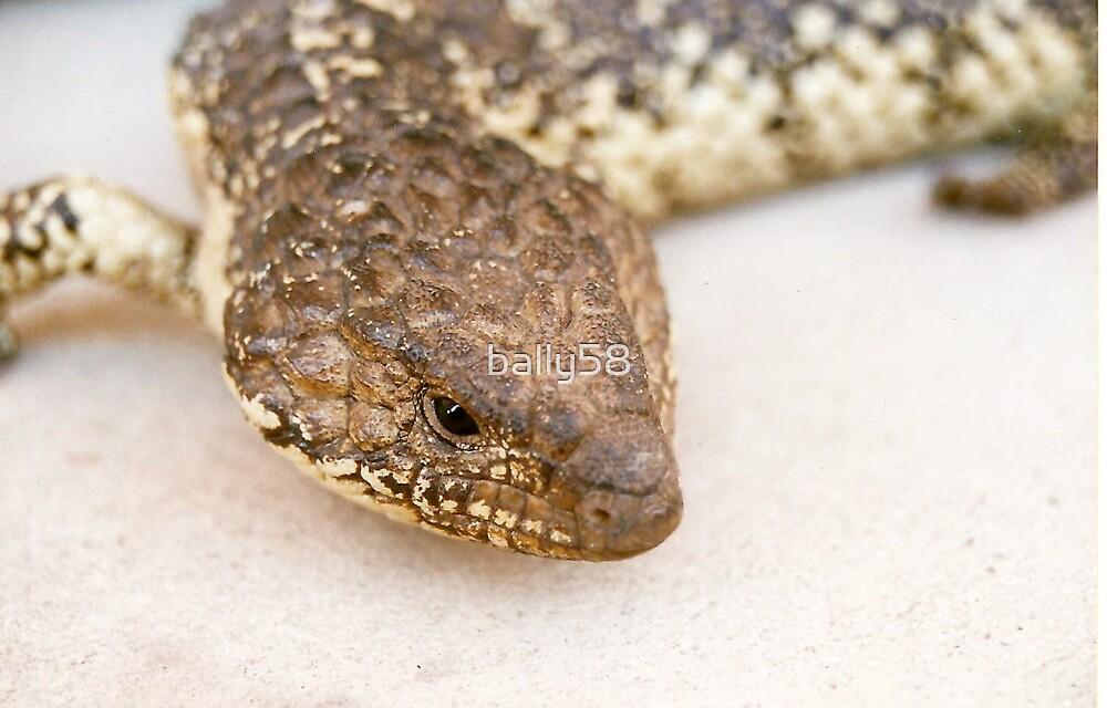sleepy lizard by bally58
