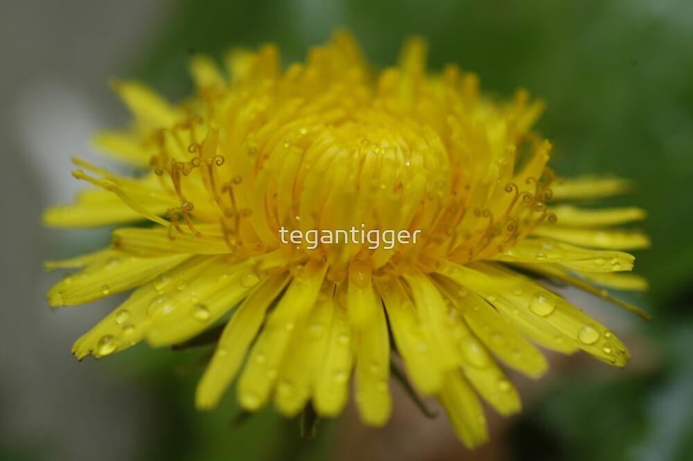 Yellow Flower by tegantigger
