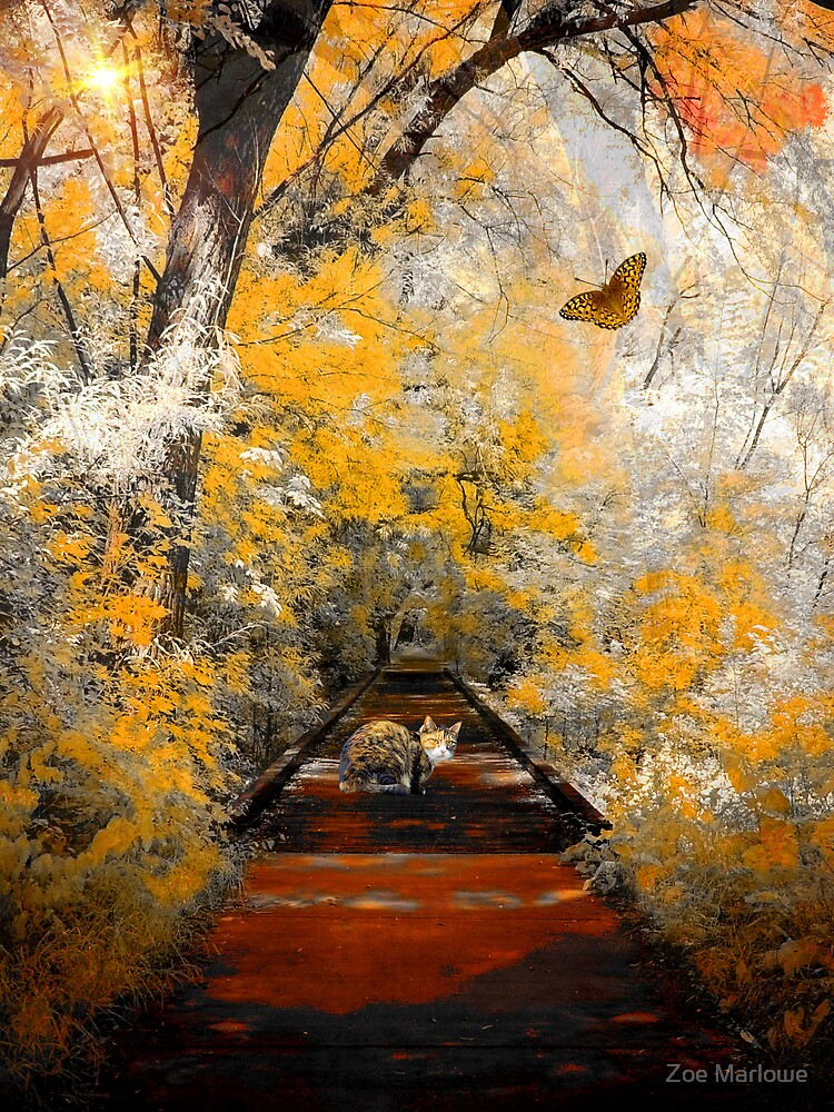The Pathway To Autumn by Zoe Marlowe