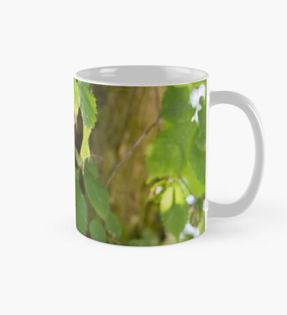 Peeking Mug