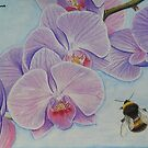 Bee aproaching Phalaenopsis Orchid by cathyscreations