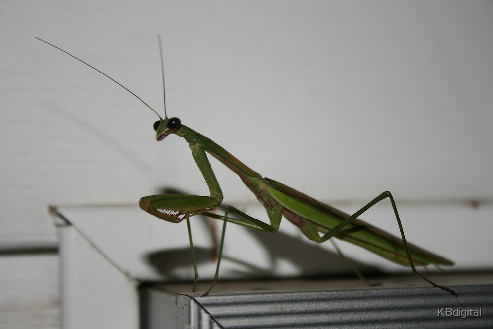 Preying Mantis II by KBdigital