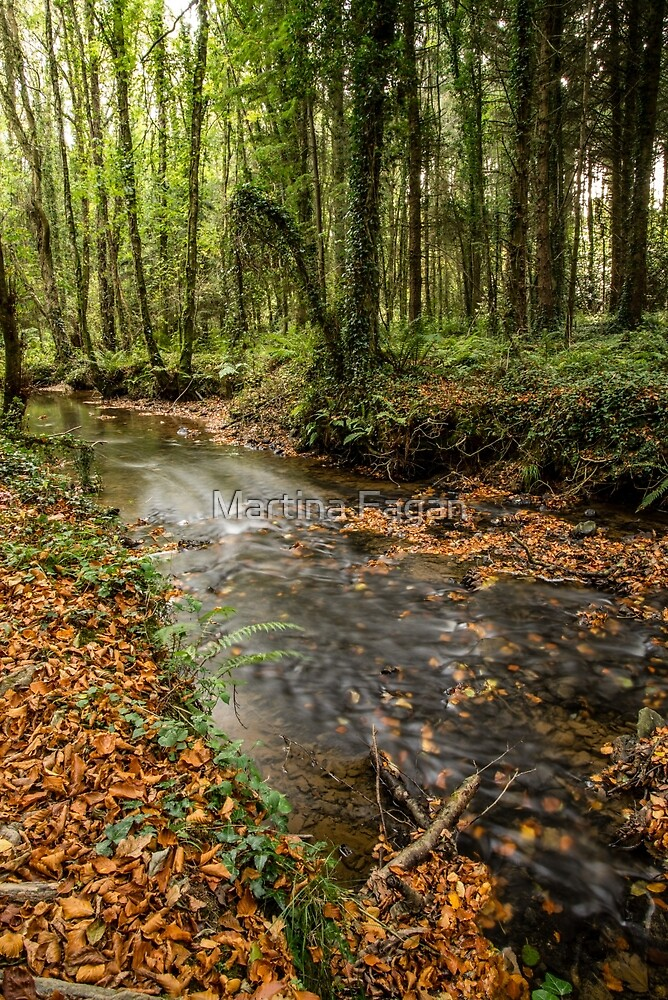 Autumnal Stream by Martina Fagan