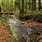 Autumnal Stream by Martina Fagan