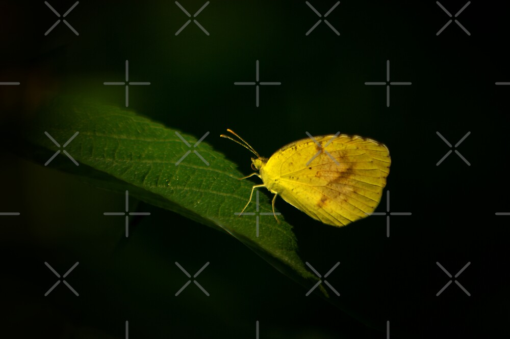 Sleepy Orange by Lisa G. Putman