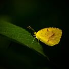Sleepy Orange by Lisa Putman