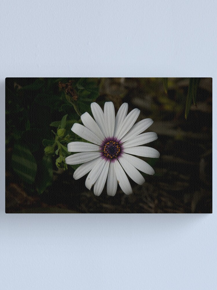 Alternate view of Light from the dark Canvas Print