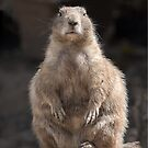 Black tailed prairie dog by alan tunnicliffe