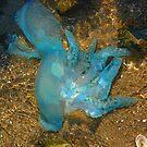 Jellyfish 2 by NomadicGoddess