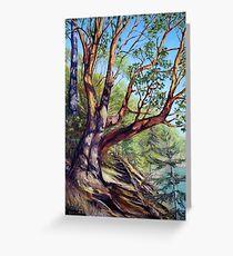 Storytelling Arbutus Tree Bennett Bay Mayne Island BC Greeting Card