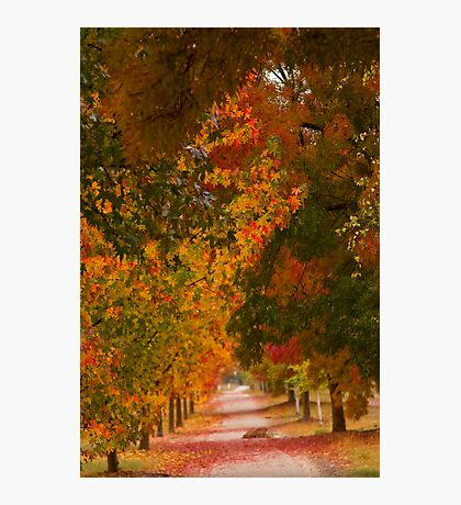 Bright Path Photographic Print