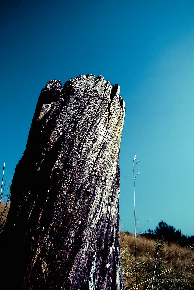 Stump by Victor Ionescu