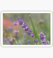 close up of lavdender violet stem. Sticker