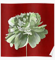 Green Peony against Red Background Poster