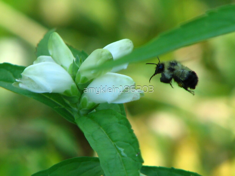 Busy Bee by amyklein196203