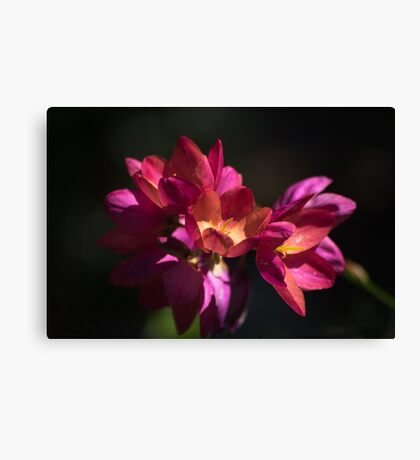 Flowers of Red and Pink Canvas Print