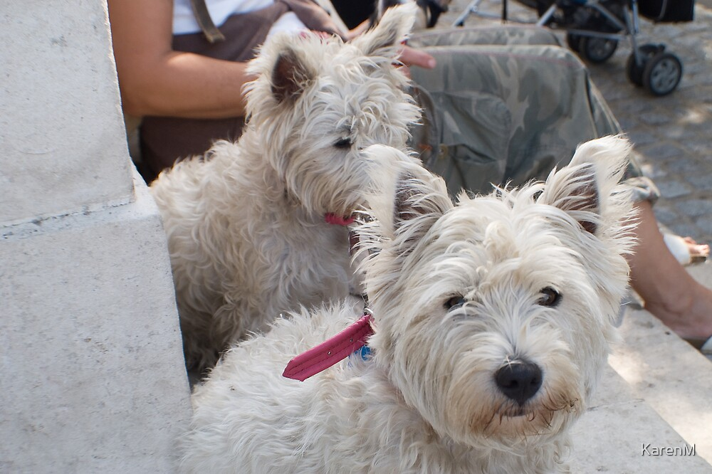 Two Dogs by KarenM