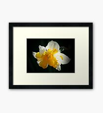 Narcissus Framed Print