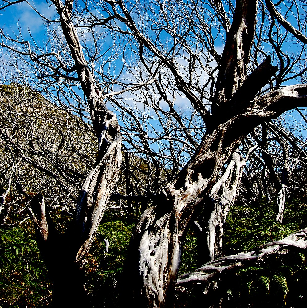 untitled #115 [wilson's promontory] by Bronwen Hyde