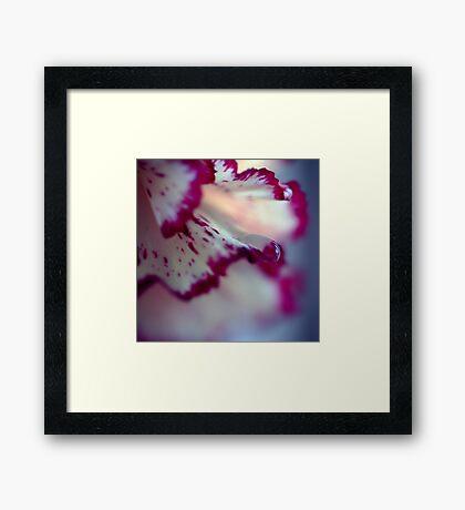 Colour Of Life XXXIII Framed Print