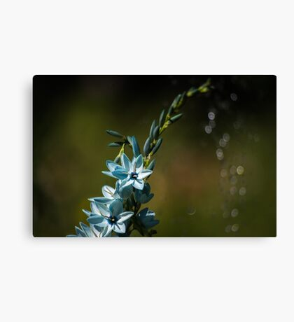 Blue Flowers really do Exist! Canvas Print