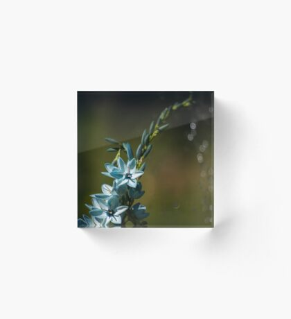 Blue Flowers really do Exist! Acrylic Block