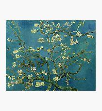 Van Gogh Almond Blossoms Photographic Print