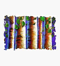 Aspen Trees Fresco Photographic Print